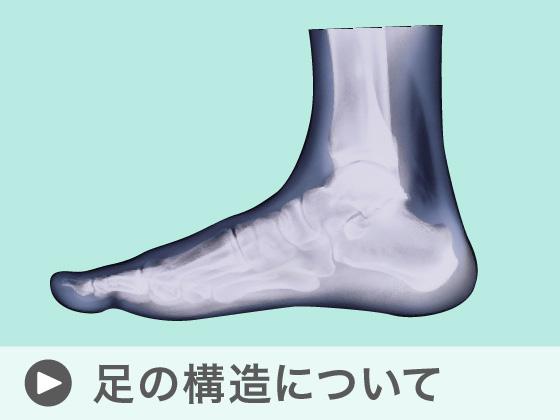 足の構造について